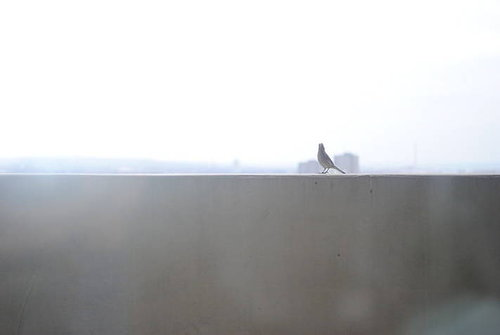 Bird on a ledge