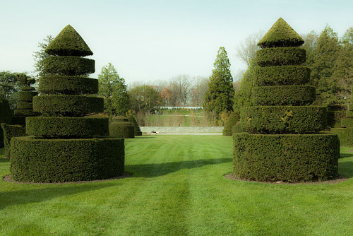 A photo of two well-kept hedges
