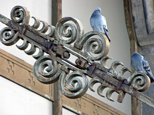A photograph of a blue bird on an ornate wall decoration