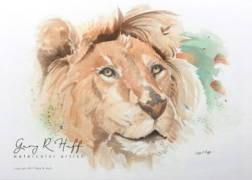 A watercolor painting of a lion by Gary R. Huff
