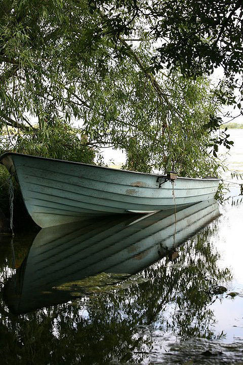 photo of boat on water under a tree