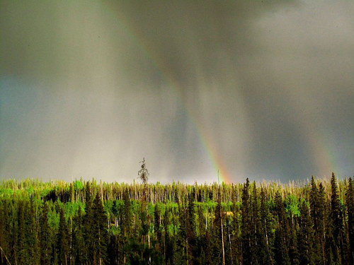A photograph of a rainbow over a British Columbia forest