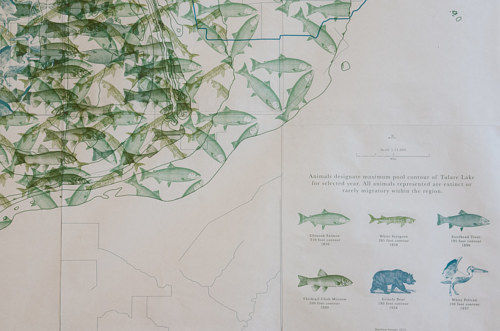 A small detail of a larger print work featuring imagery of fish