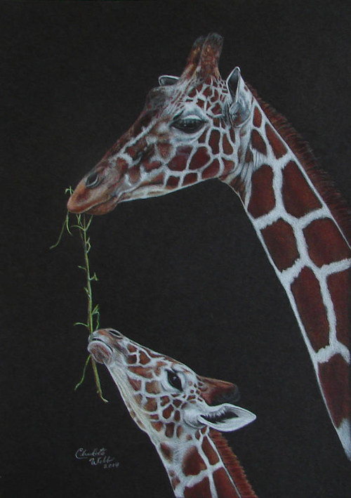 A portrait of a mother and child giraffe