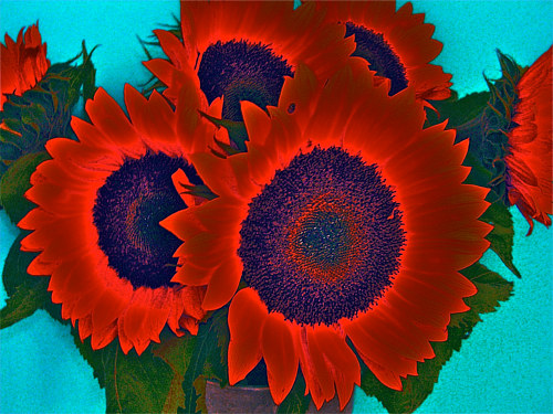 A photo print of saturated red flowers
