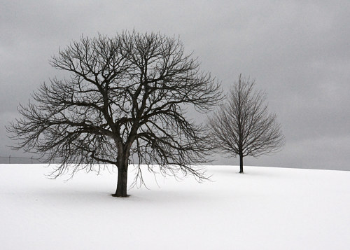 A photo of two trees on a snowy ridge