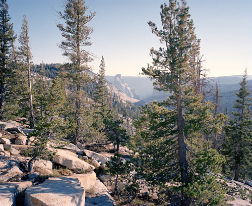 A photograph of wilderness inside Yosemite National Park