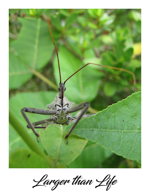 A close up photograph of a wheel bug