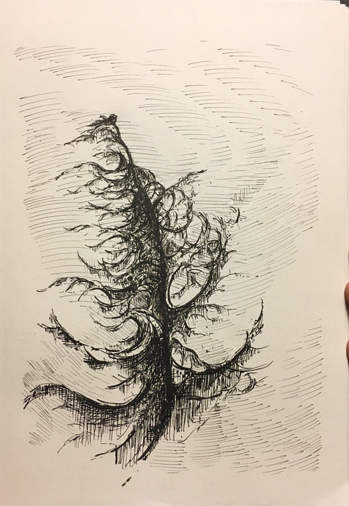 An ink sketch of a cedar tree