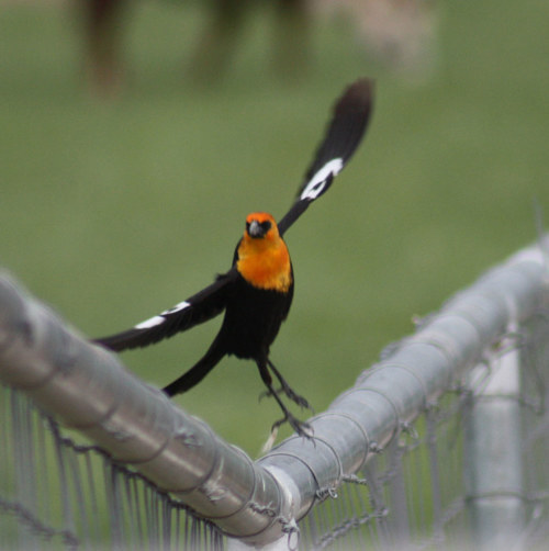A photo of a colorful bird on a fence