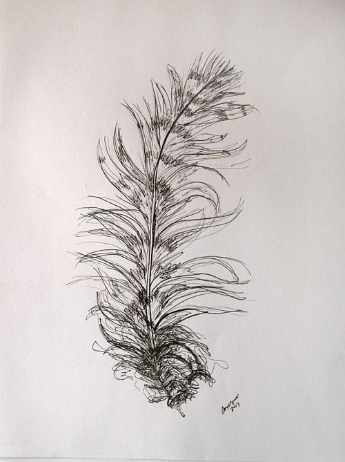 A drawing of an owl feather