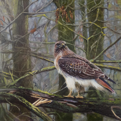 A painting of a hawk sitting in a tree