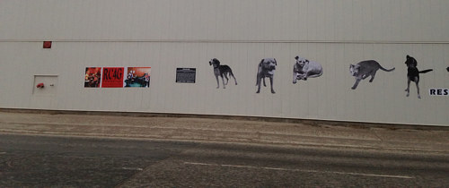 A series of images of pets wheat pasted onto the side of a building