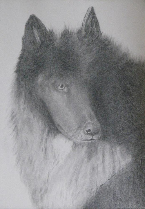 A graphite portrait of a fluffy dog
