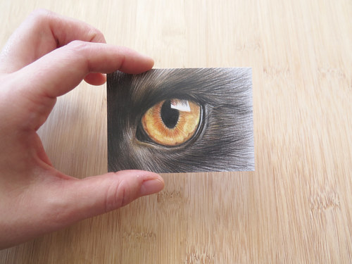 A miniature drawing of a cat's eye