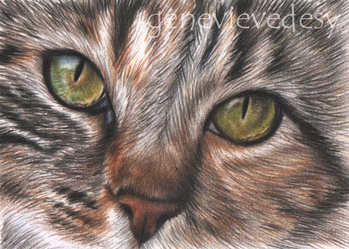 A miniature drawing of a cat's face with green eyes
