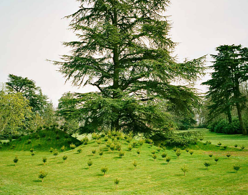 A land artwork consisting of many tiny trees planted around one large one