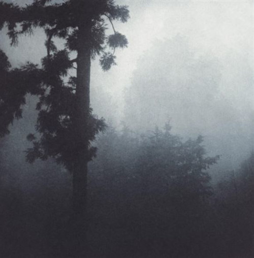A misty photo of some trees