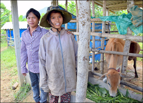 A photo of a young Vietnamese couple with a cow