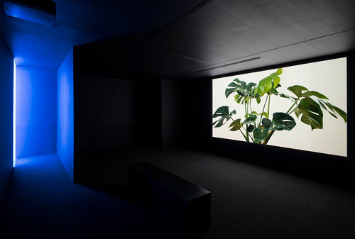 An installation of an artwork with a projection of a plant