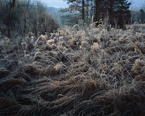A photo of a meadow with grass covered in frost