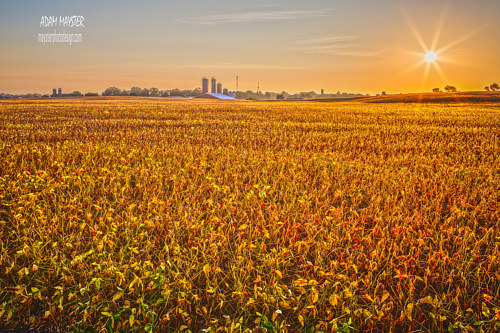 A photo of a bright yellow field