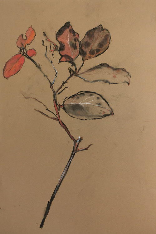 A charcoal and conte drawing of a branch with flowers