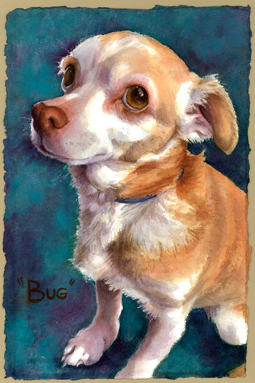 A watercolour painting of a small dog