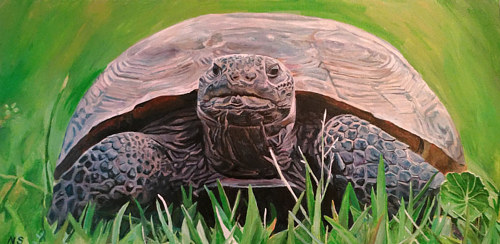 A painting of a tortoise on a grassy background