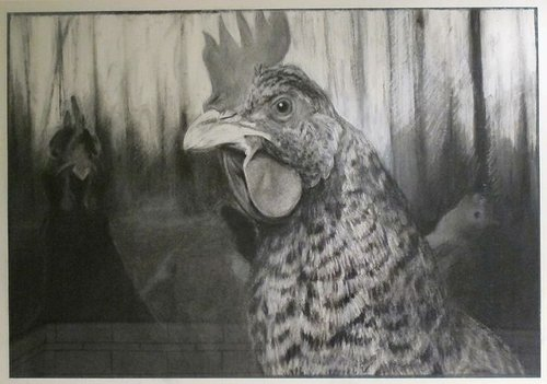 Charcoal drawing of chicken