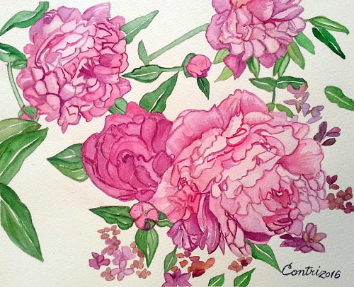 A watercolour painting of pink peonies