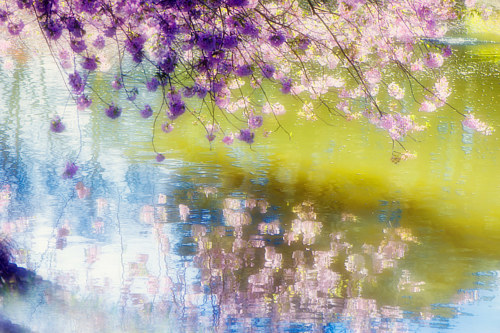 A photograph of purple flowers hanging over a body of water