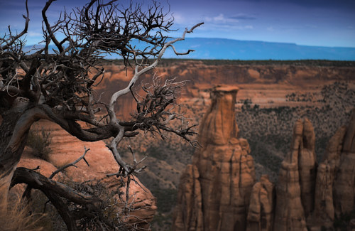 A photograph of a tree branch growing out in front of a canyon