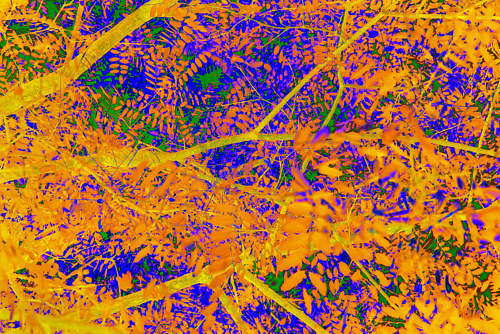 A colour-manipulated photo of a tree canopy