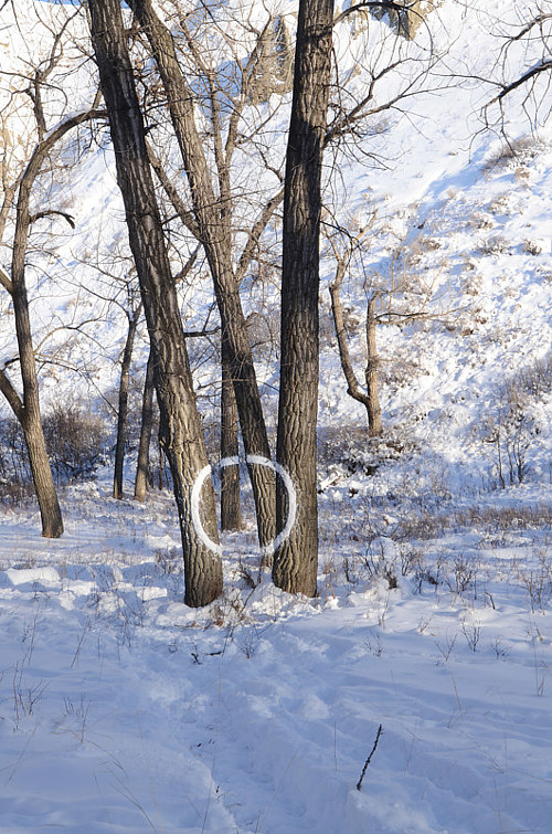 An piece of land art made by packing snow into a circle on a tree