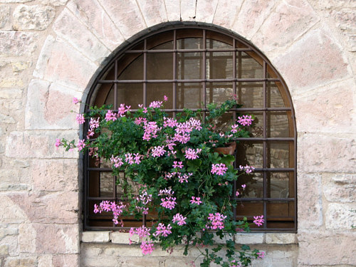 A painting of a window box with pink flowers