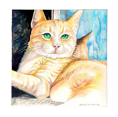 A coloured pencil drawing of a cat