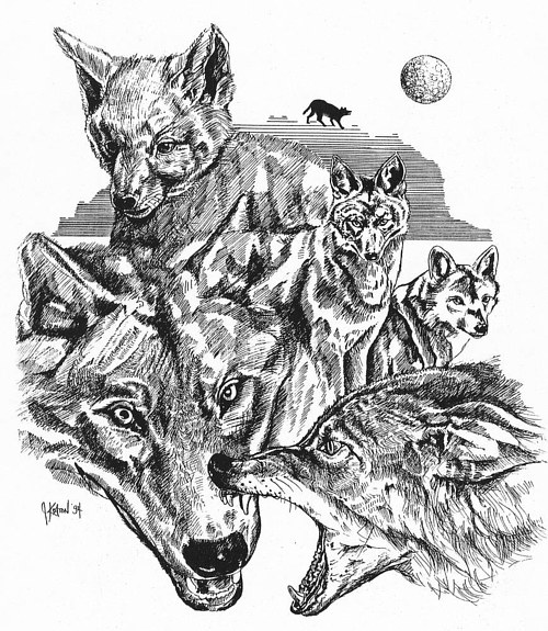 A drawing of the stages of life for a wolf