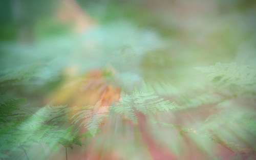 A photo of ferns taken with a blurred effect