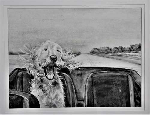 A portrait of a dog in the back seat of a convertible