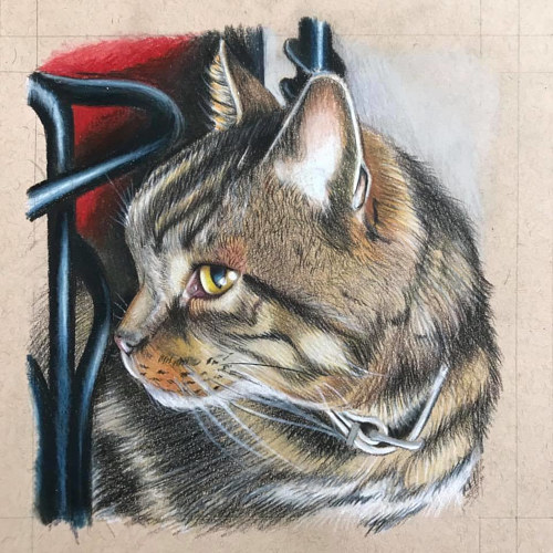 A realistic drawing of a cat