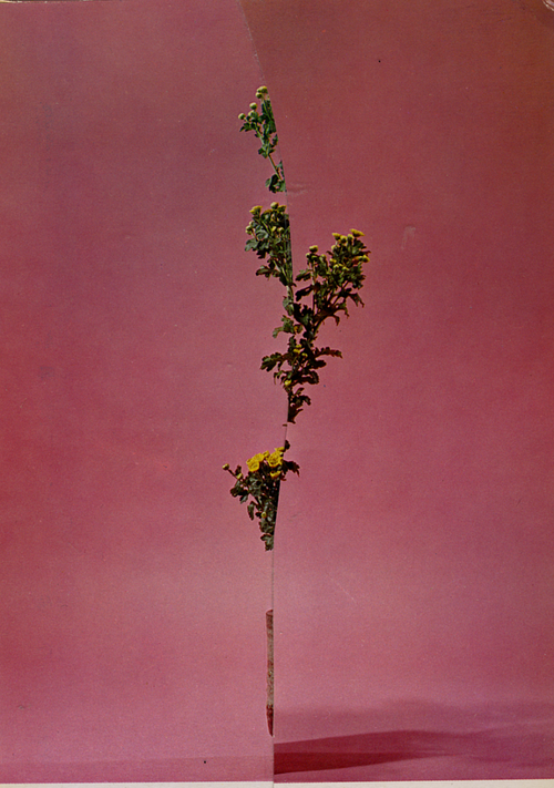 A collage of pink walls with a narrow sliver of a plant in the middle