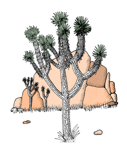 An illustration of a desert plant