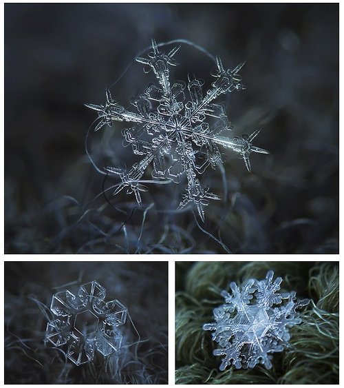 macro photograph of a snowflake