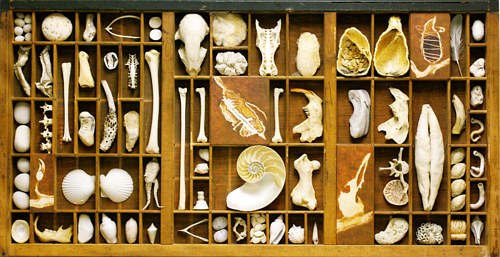 An assemblage artwork made up of bones, shells, and stones arranged in a tray