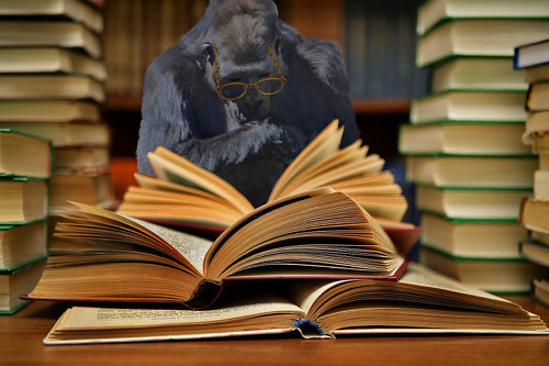 A composite photo of a gorilla doing research
