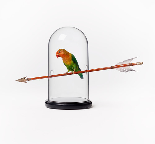 A sculpture of a taxidermied bird sitting on an arrow