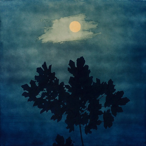 A cyanotype print of a tree