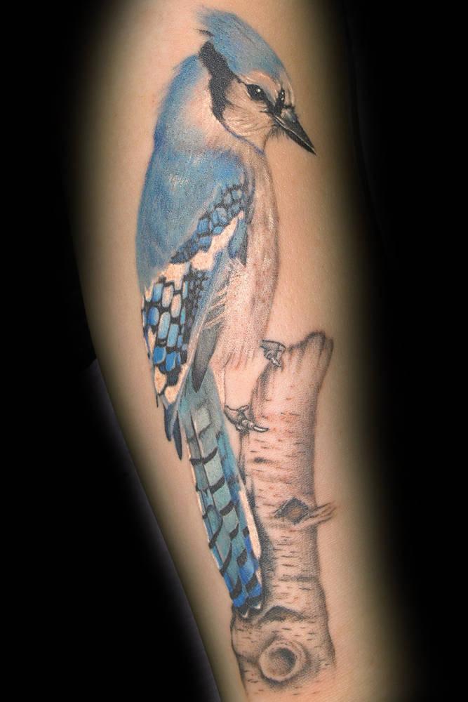 1e4ce770283b8 Heather's Blue Jay Tattoo Kelowna B.C. - Sweet Siren Tattoo in ...