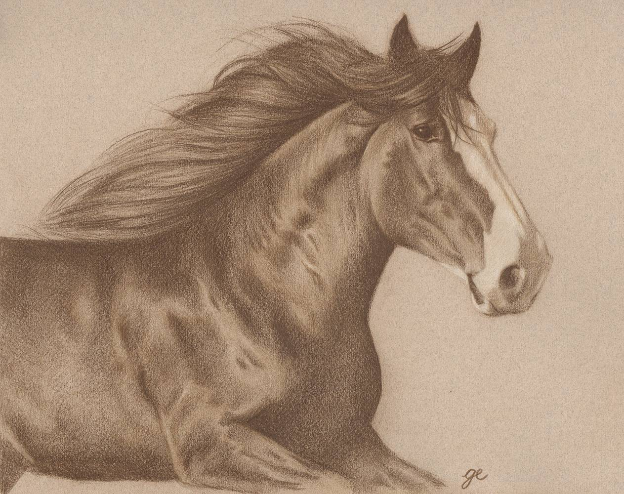 Dessin de cheval monochrome, avril 2014 by Genevieve Desy